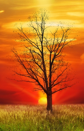 single  oak treeon sunset sky background photo