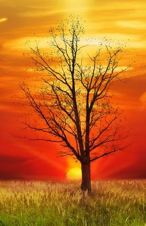 single  oak treeon sunset sky background photo