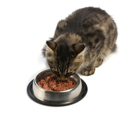 food supply: small kitten near its bowl with meal, looking at camera Stock Photo