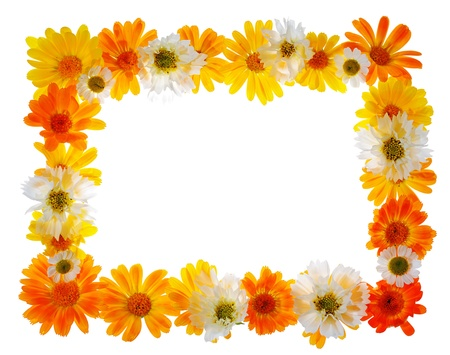 calendula:  floral frame isolated on white background