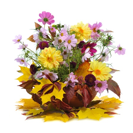 autumn floral composition with georgina  isolated on white background photo