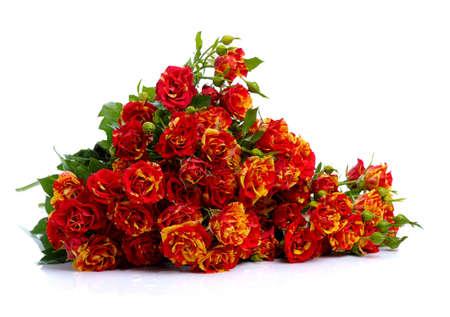 rosas naranjas: manojo de rosas rojas aisladas sobre fondo blanco Foto de archivo