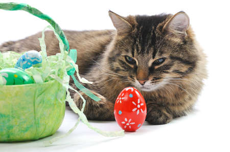 cat and easter eggs on white background photo