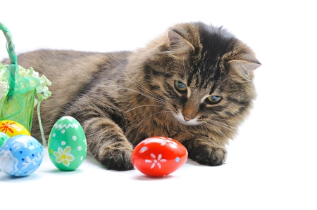 cat and easter eggs on white background Stock Photo - 12639589