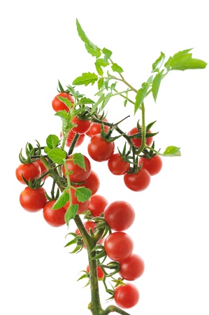 twig of fresh cherry tomato isolated on white background photo