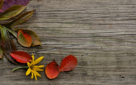 autumn leaves on wood background photo