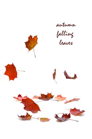 autumn falling leaves with shadow on white background photo
