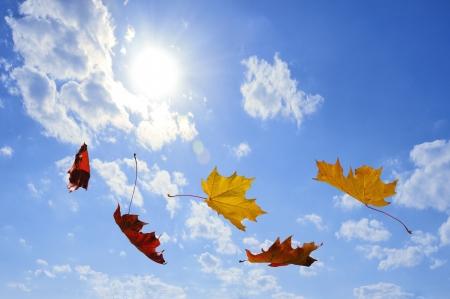 foglie di autunno cadono sul cielo blu Archivio Fotografico