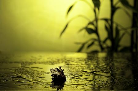 seashell on glowing yellow background Stock Photo - 16448814