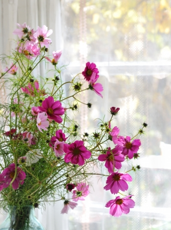 cosmos flowers: bunch of pink cosmos flowers standing  on window Stock Photo