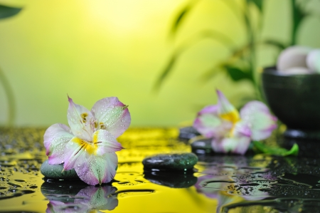 flower and stones on wet background photo