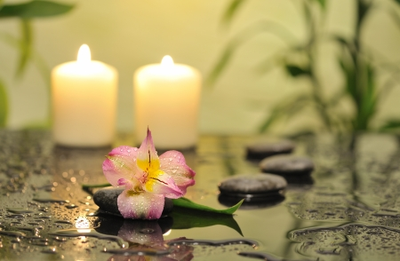 spa still life with pink orchid flower and white burn candles on green background Stock Photo