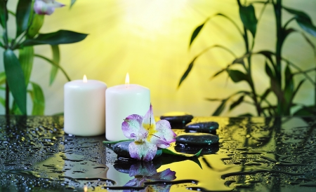 flower and burn candles on wet background Stock Photo - 17189280