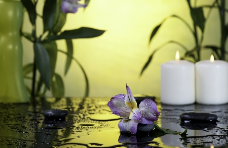 flower and burn candles on wet background Stock Photo - 17189277