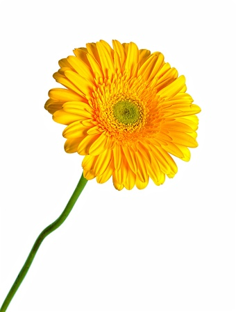 yellow gerbera isolated on white background Stock Photo - 17205144