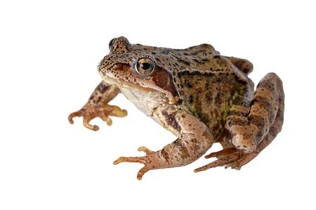 hopping: frog