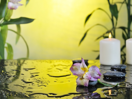 flower and burn candles on wet background Stock Photo - 18087627