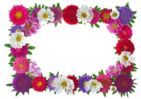 borde de flores: colorido marco de Aster de flores aisladas sobre fondo blanco