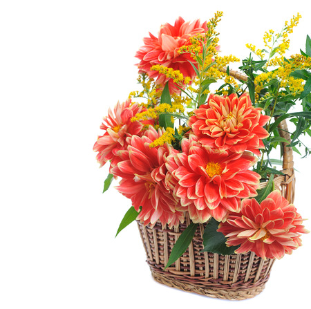 georgina: autumn flowers of georgina in basket  isolated on white