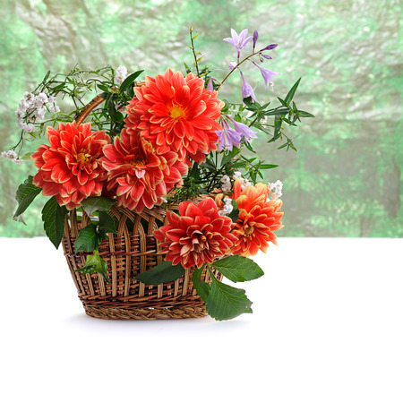 georgina: autumn flowers of georgina in basket  on green background