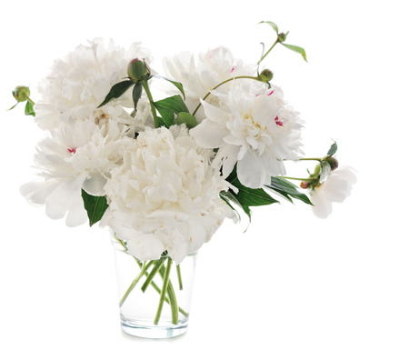 white peony in glass vase isolated on white background photo