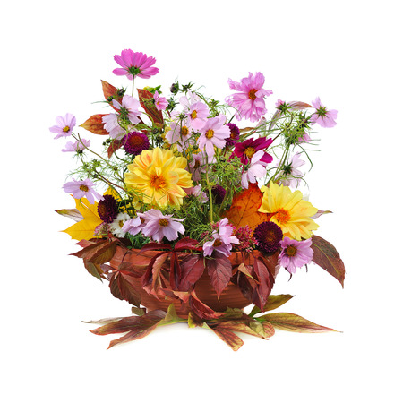 georgina: autumn floral composition with georgina  isolated on white background Stock Photo