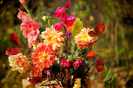 georgina: bouquet of autumn flowers Stock Photo