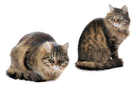 cat isolated: cat isolated on white background Stock Photo
