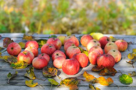 apples on rough grey wood table in autumn garden