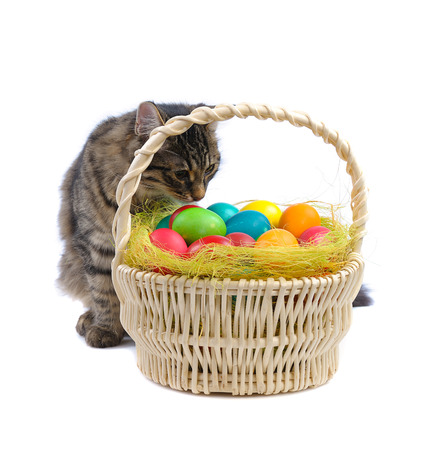 eastertime: cat and easter eggs on white background