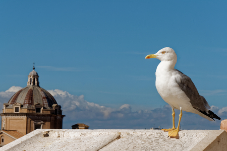 Insolent bird in the city. Stock Photo