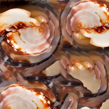 Texture of natural materials, sea shell, shell from the ocean. Stock Photo - 118504856