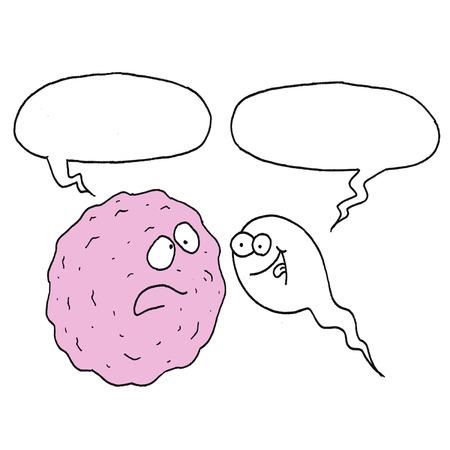 ovary and sperm