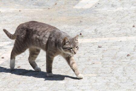 slyly walking cat Stock Photo