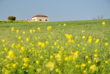 Lonely house in the field with the yellow flowers at the foreground