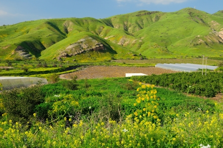 in the heights:  View of Golan Heights landscape  Northern Israel