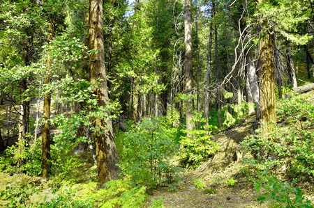 yosemite national park: Forest in the Yosemite national park. California. Stock Photo