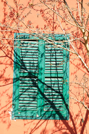 tree branches: Old shuttered window obstructed with the tree branches.