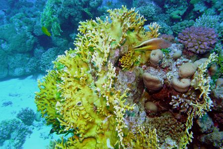 Underwater life of coral reef Stock Photo