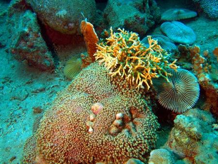 stony corals: Stony corals of the South-Chinese sea, Vietnam, Nha Trang Stock Photo