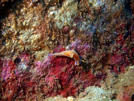 sea slug: Sea slug behind work, Vietnam, Nha Trang