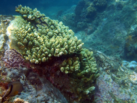 Stone coral, area of the city of Nha Trang, Vietnam photo