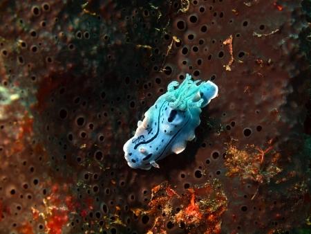 slug: Sea slug, island Maktan, Philippine