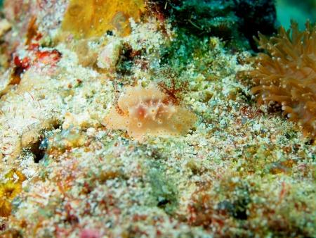 sea slug: Sea slug, island Maktan, Philippine