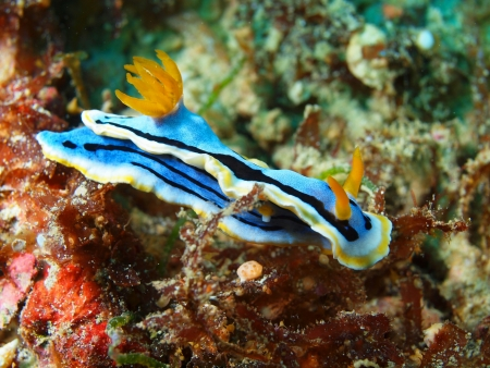 Sea slug, island Maktan, Philippine photo