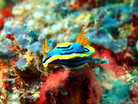 babosa: Lingote de mar, isla Maktan, Filipinas