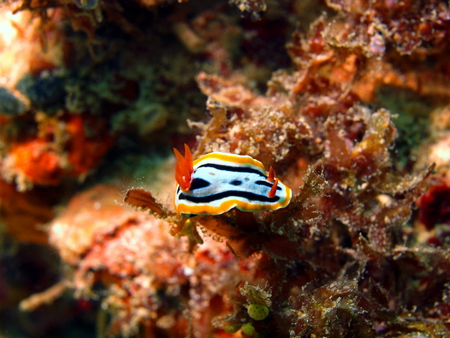 Sea slug photo