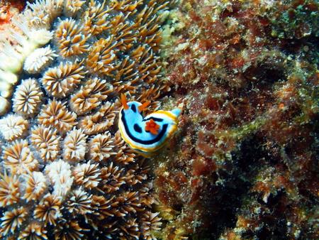 lesma: Lesma do mar, ilha Maktan, filipino Banco de Imagens