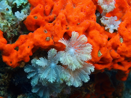 sea world: Soft coral, Island Bali, Pemuteran Stock Photo