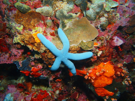 Starfish, North Sulawesi, Bunaken Island Stock Photo